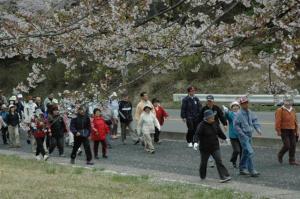 『第7回いずみざき桜ウォーク当日08』の画像