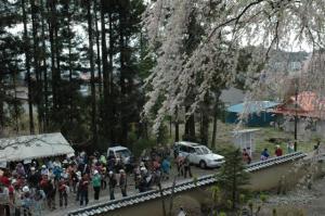 『第7回いずみざき桜ウォーク当日10』の画像