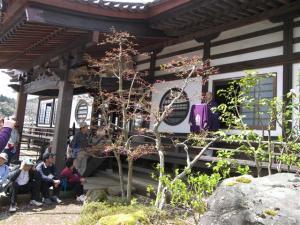 『第7回いずみざき桜ウォーク当日11』の画像