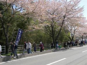 『第7回いずみざき桜ウォーク当日13』の画像