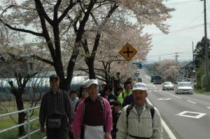 『第7回いずみざき桜ウォーク当日14』の画像