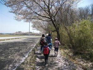 『第7回いずみざき桜ウォーク当日17』の画像