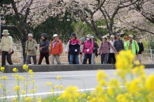『第10回泉崎さくらウォーク開催01』の画像