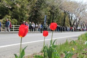 『第10回泉崎さくらウォーク開催06』の画像