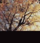 『『木・イチョウ』の画像』の画像