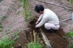 『自然薯の収穫』の画像