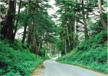 『『踏瀬旧国道松並木』の画像』の画像