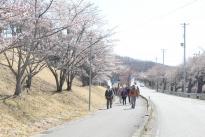 第16回いずみざき桜ウォークが開催されました。